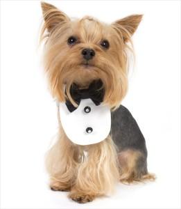 Dog-Black-Tuxedo-Bib-Yorkie_pu
